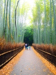 Cinematic path along the famous Sagano bamboo forest