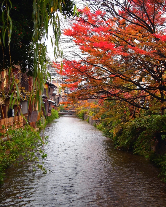 Shirakawa in Autumn - Most Beautiful Street in Kyoto