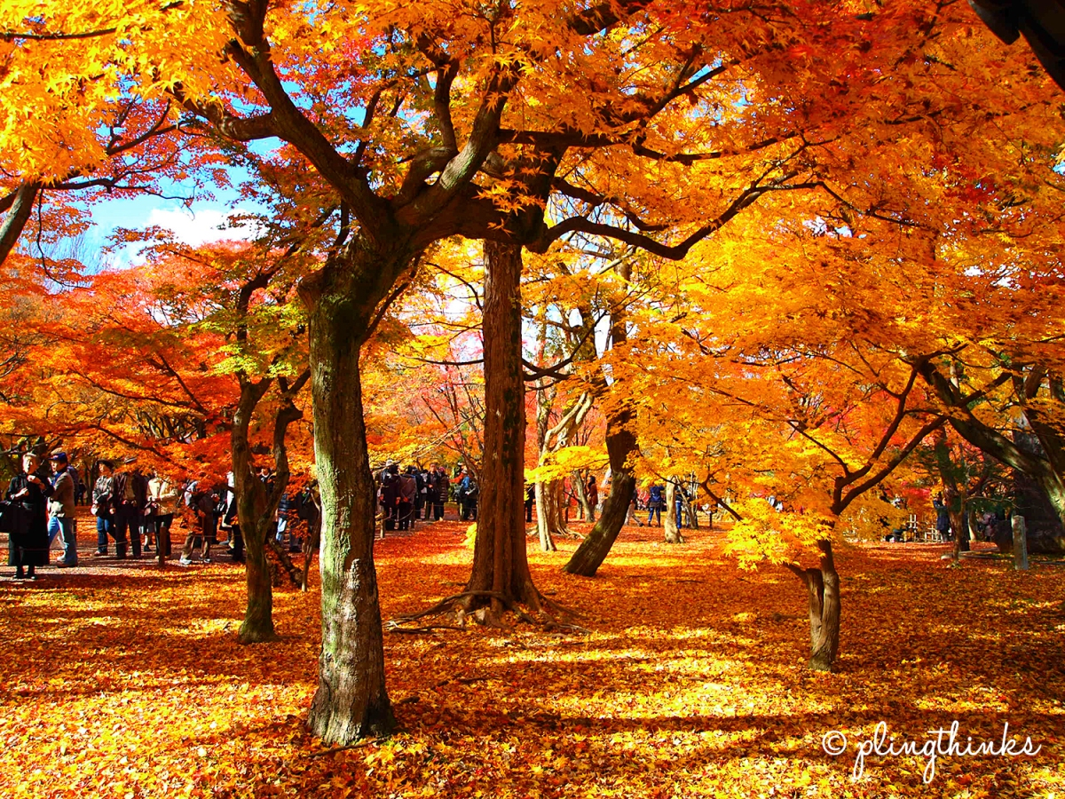 Tofuku-ji Kyoto // A Must-Visit for Spectacular Autumn Colors