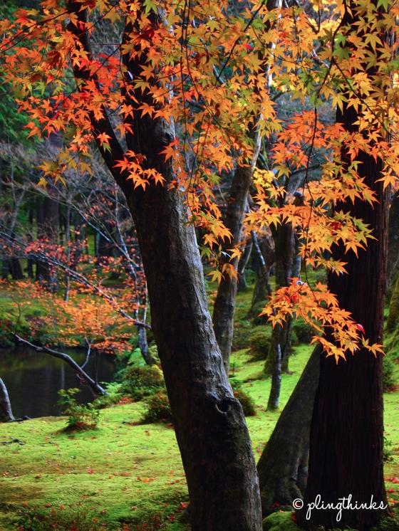 Autumn Moss Garden - Kyoto Saihoji Kokedera