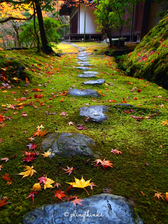 Stone Maple Leaves Moss Autumn - Saihoji Kyoto